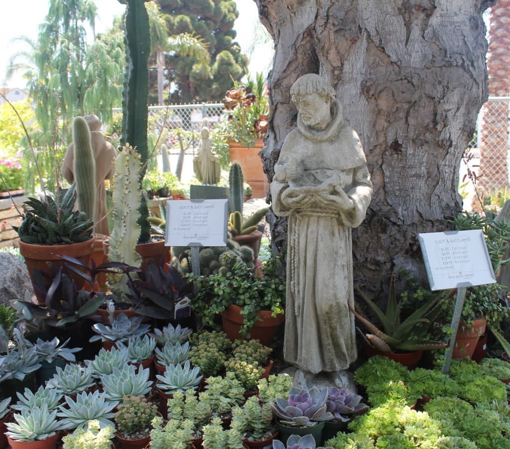 Dana Point Nursery, succulents