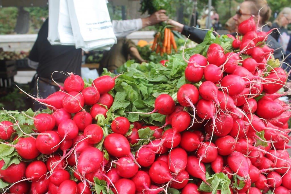 radishes at Union Square Greenmarket