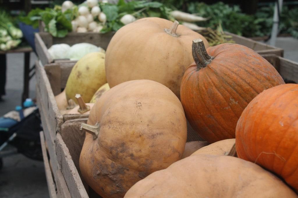 pumpkins at Union Sqaure Greenmarket