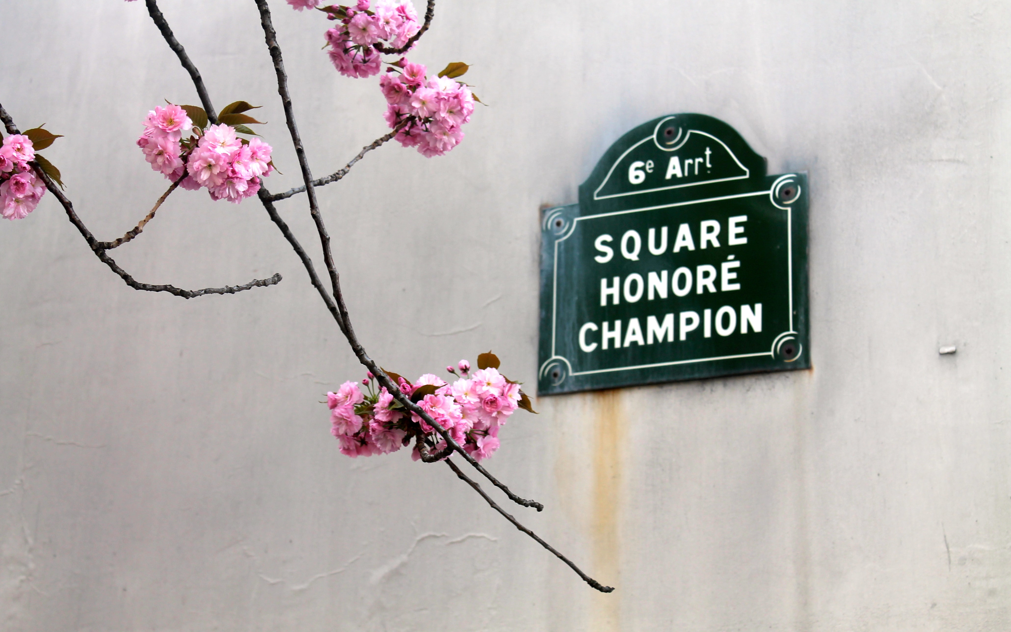paris in the spring + pink