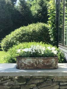 all white flowers in vintage stone planter