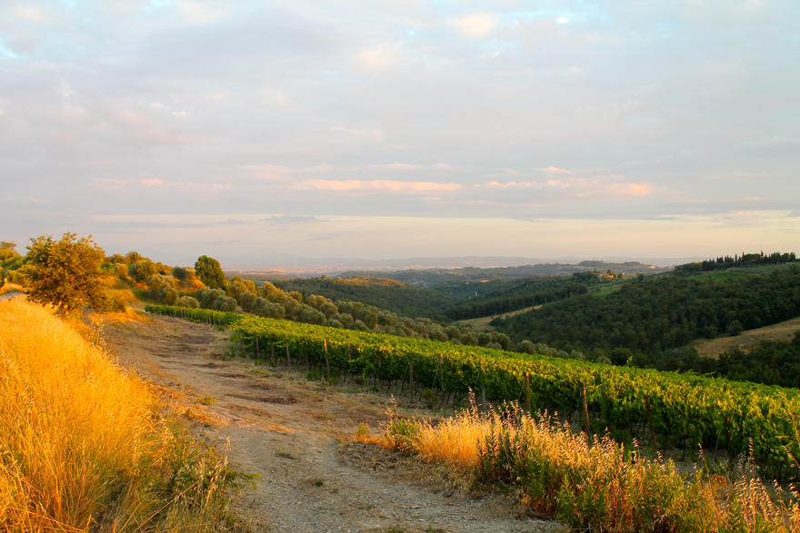 Tuscany-Summer-Italy-Hills-Olive-trees-vineyards-Siena-Sunset