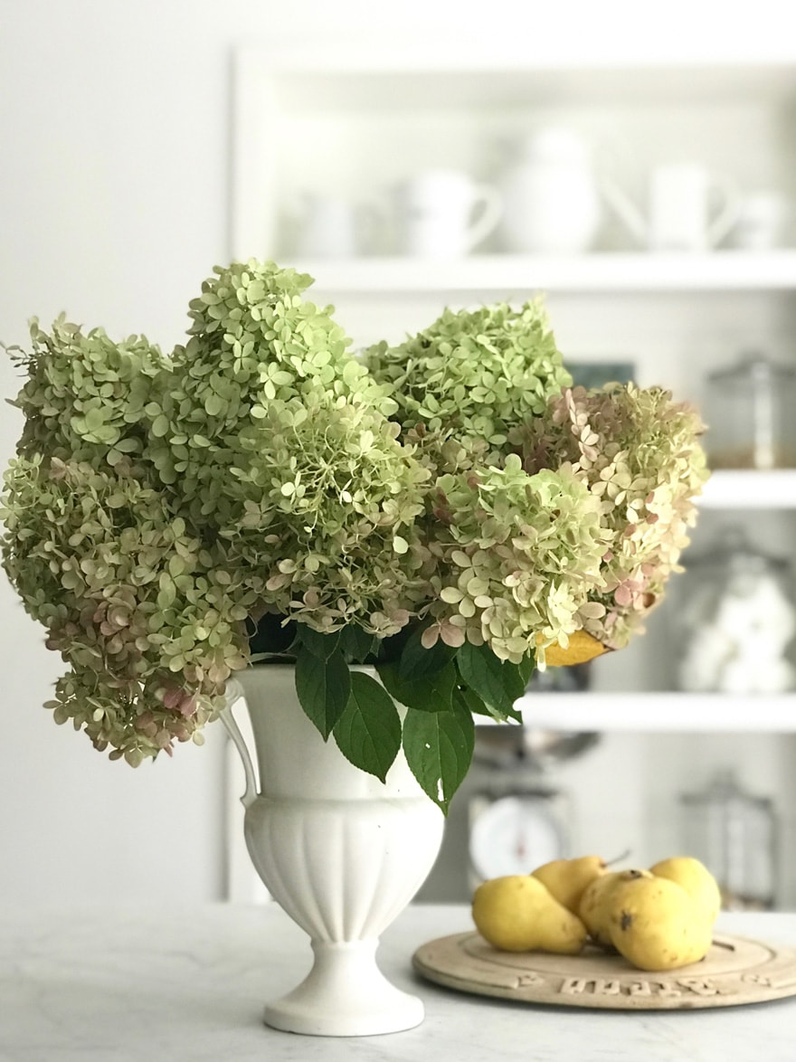 Diane-Karmen-Still-life-kitchen-pears-fall-limelight-hydrangeas-vintage-vase-kitchen