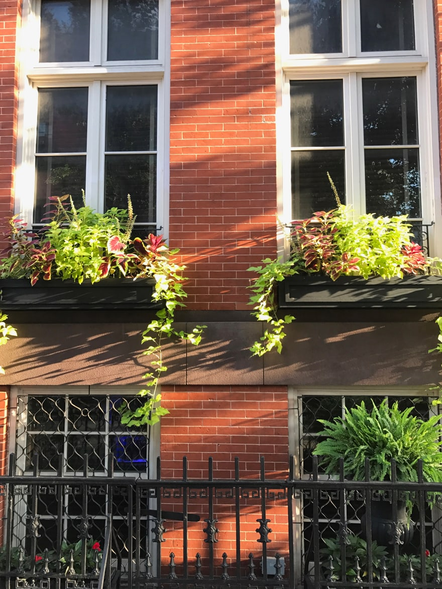 end-of-summer-window-boxes=nyc-west-village