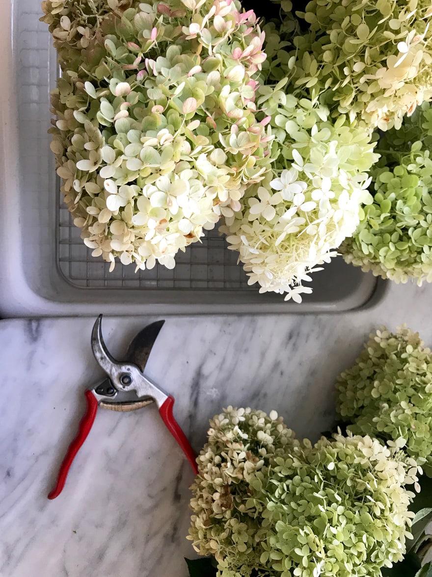 limelight-hydrangeas-marble-countertops-farm-sink-garden-cutters-clippings