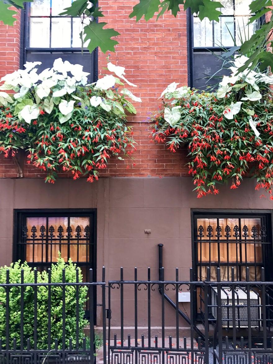 summer-window-box-west-village-NYC
