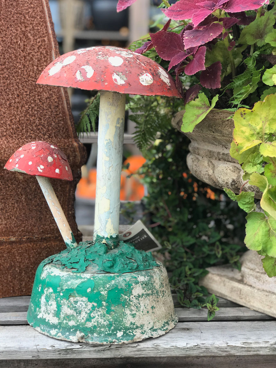 fall-gardening-terrain-mushrooms-antigue-garden