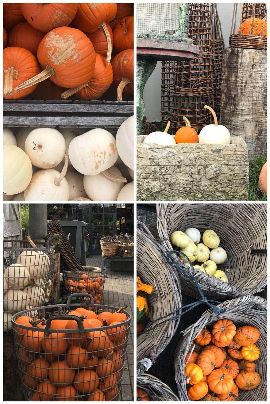terrain-westport-pumpkins-rustic