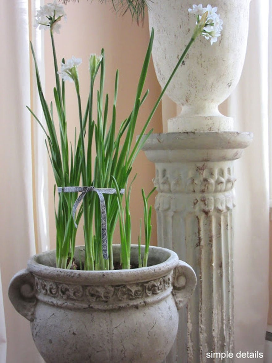 I love paper whites in rustic containers at Christmas time