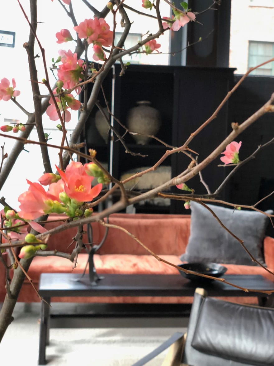 quince blooms in a room with a pink velvet sofa