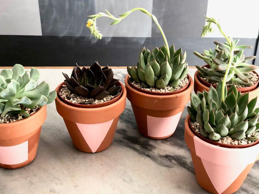 pots with succulents