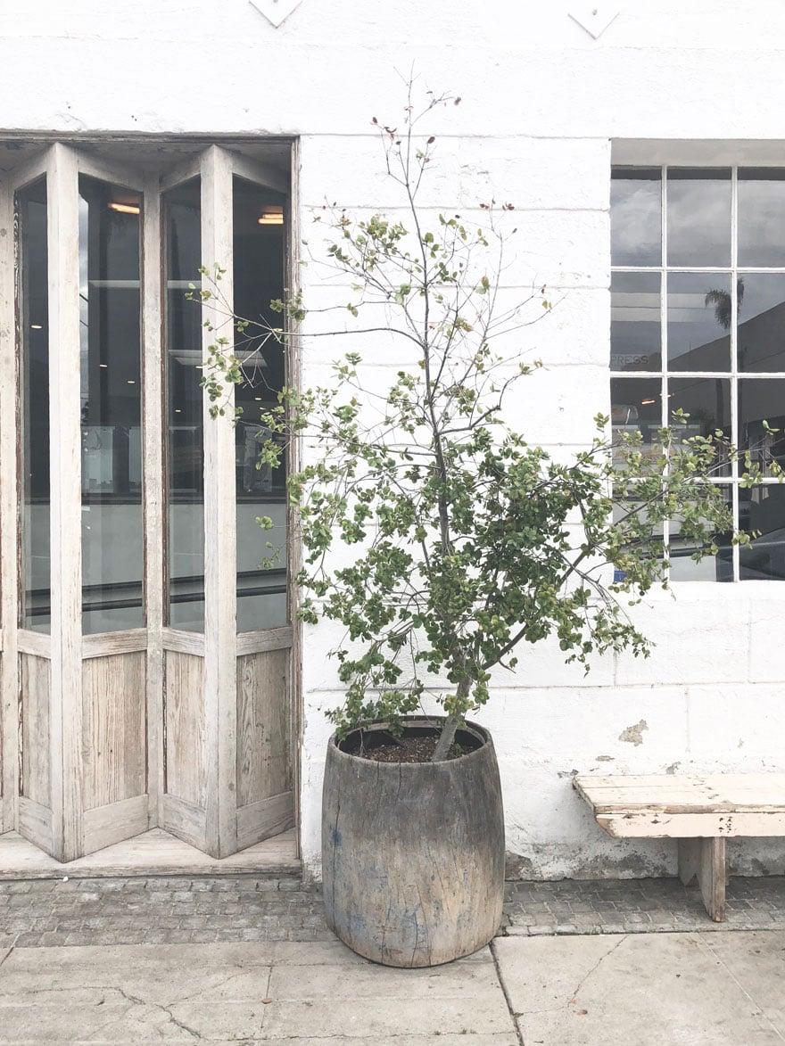 tree in planter, wood bi-fold doors on exterior of shop
