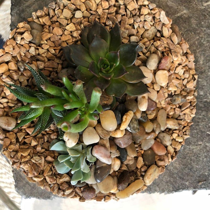 terrarium, stones, plants