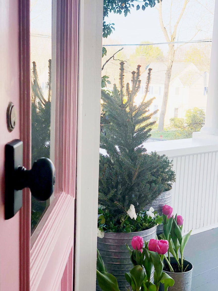 black door knob on pink door, tulips
