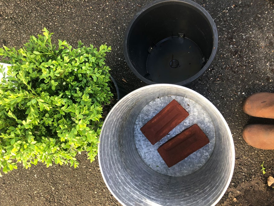 planters with bricks in bottom, boxwood, plant liner