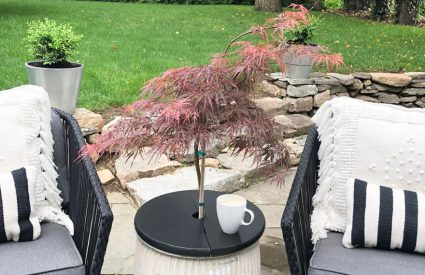 chairs and table with small tree