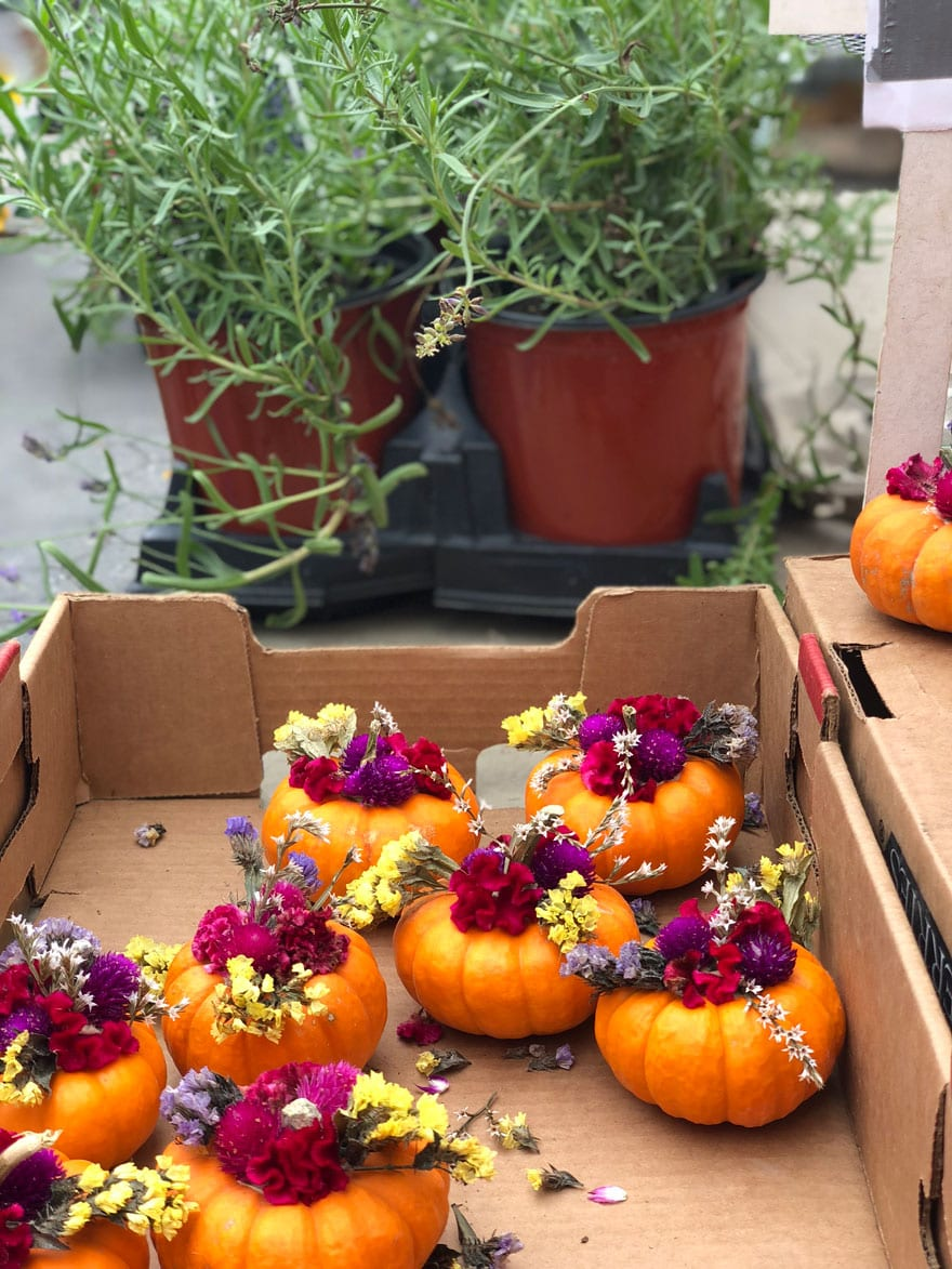 mini pumpkins with flowers