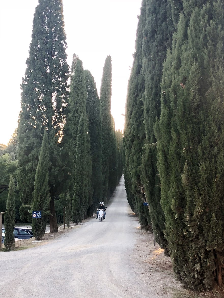 tall trees in italy along a long driveway with a motorcycle in the distance