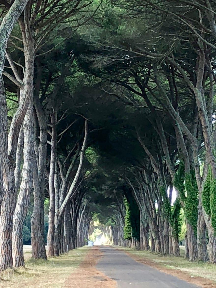 tree arch italy