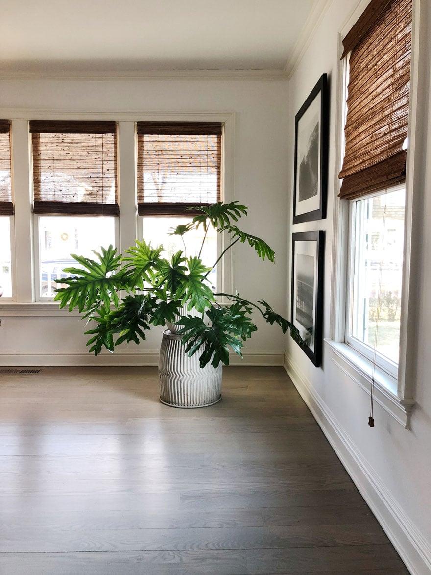plant, windows, blinds, wood floors
