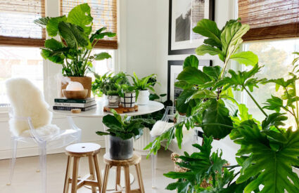 plants on floor and saarinen table, wood stools