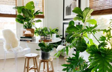 plants on floor and saarinen table, wood stools