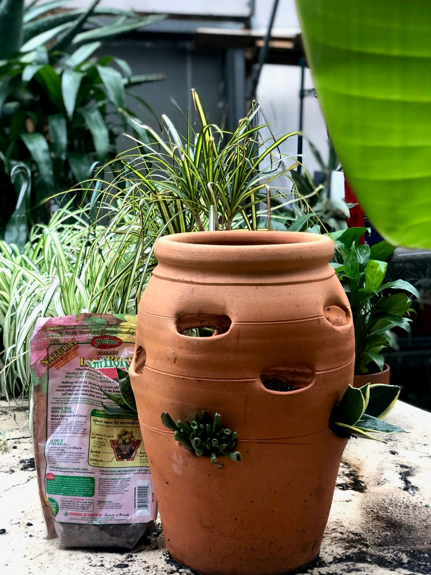 strawberry pot in greenhouse
