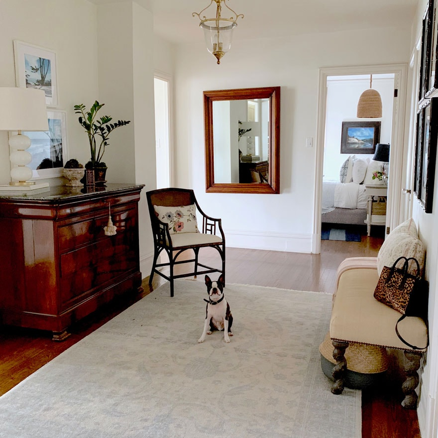 dog in room with mirror, rug, bench, hutch