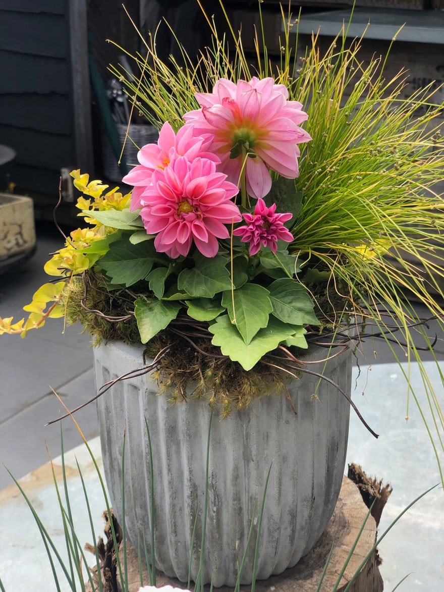 pink plant with grass and vine in planter