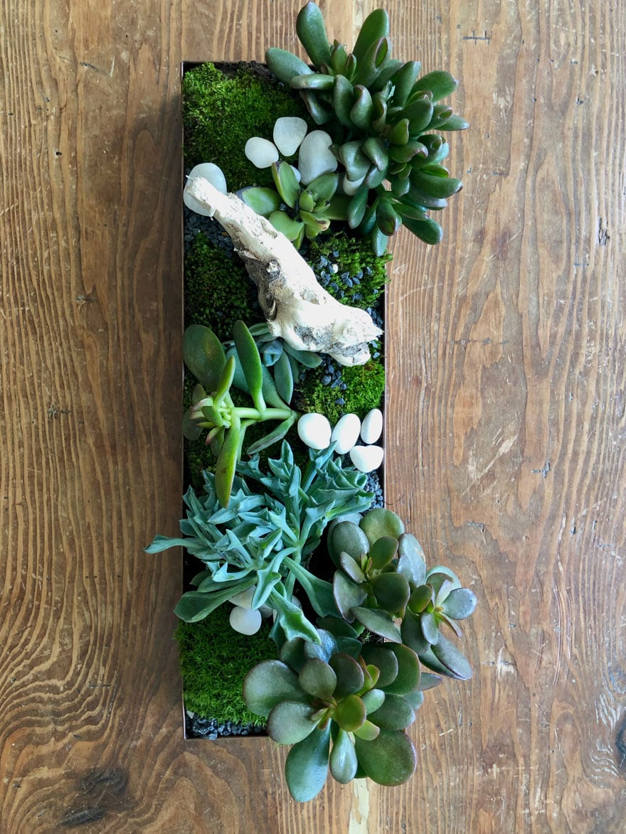 succulents, drift wood, stones, moss in tray