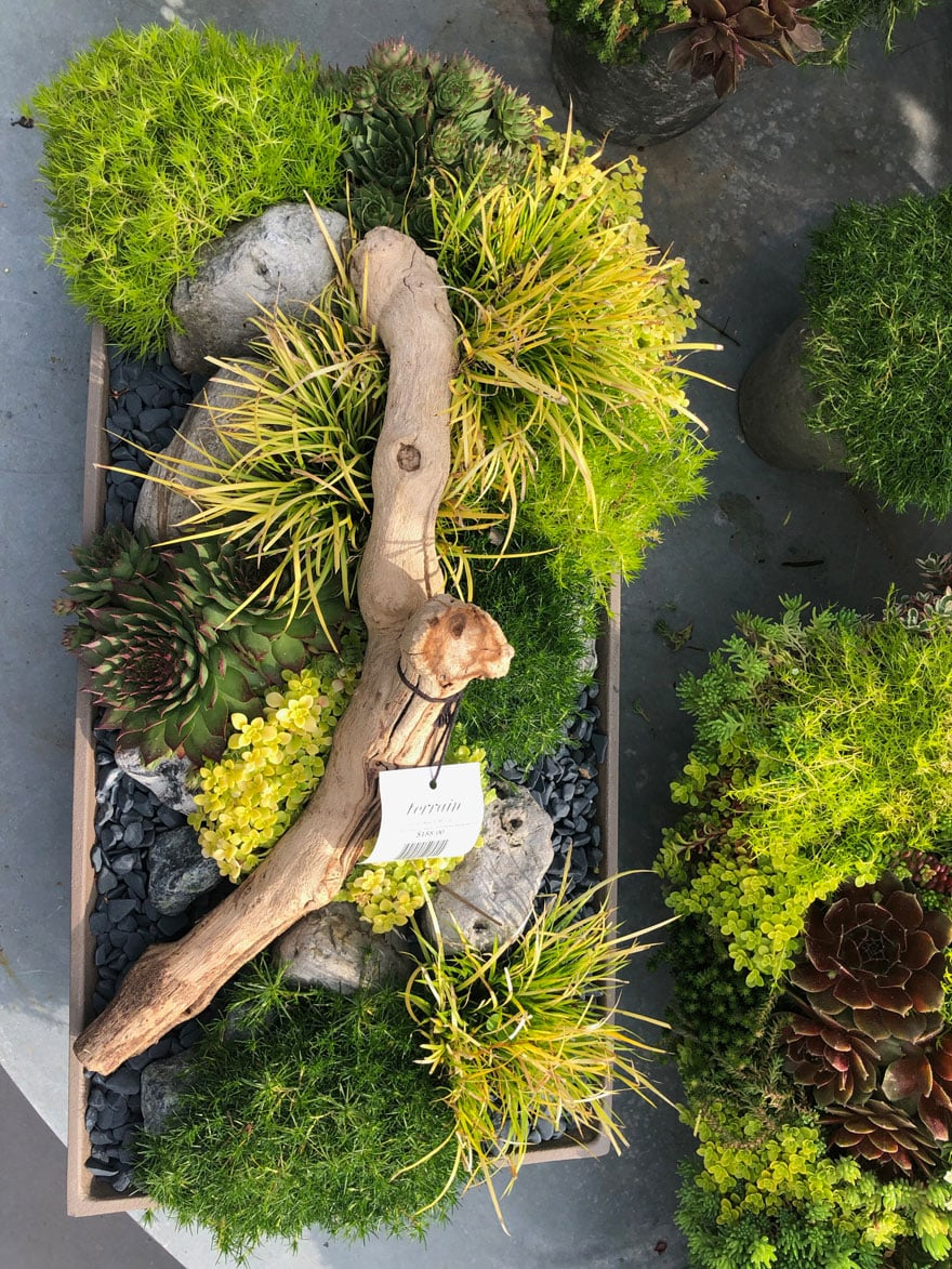 mixed grasses, moss, drift wood in rectangular planter