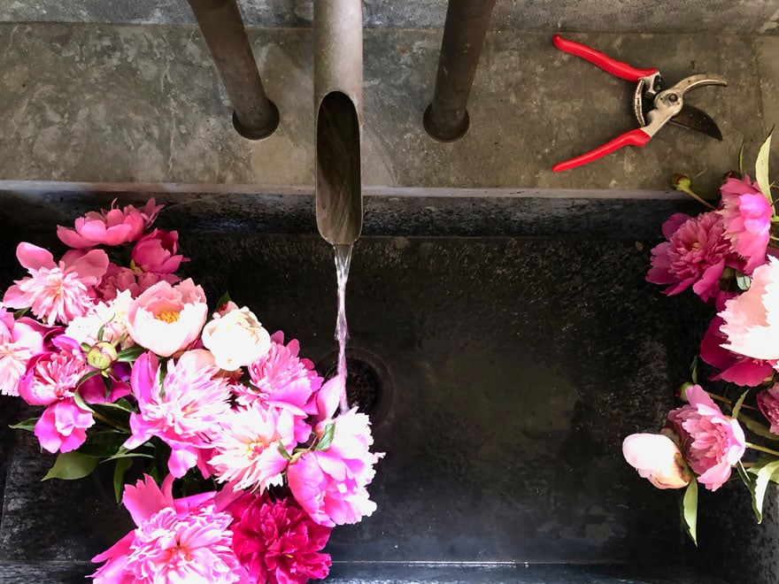 sink, garden clipper, peonies