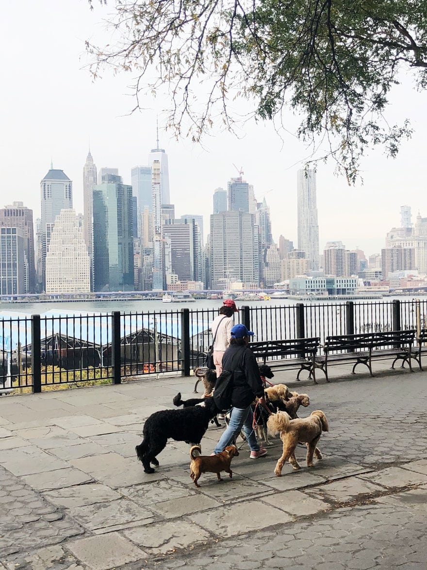 people walking dogs along promenade with NYC views