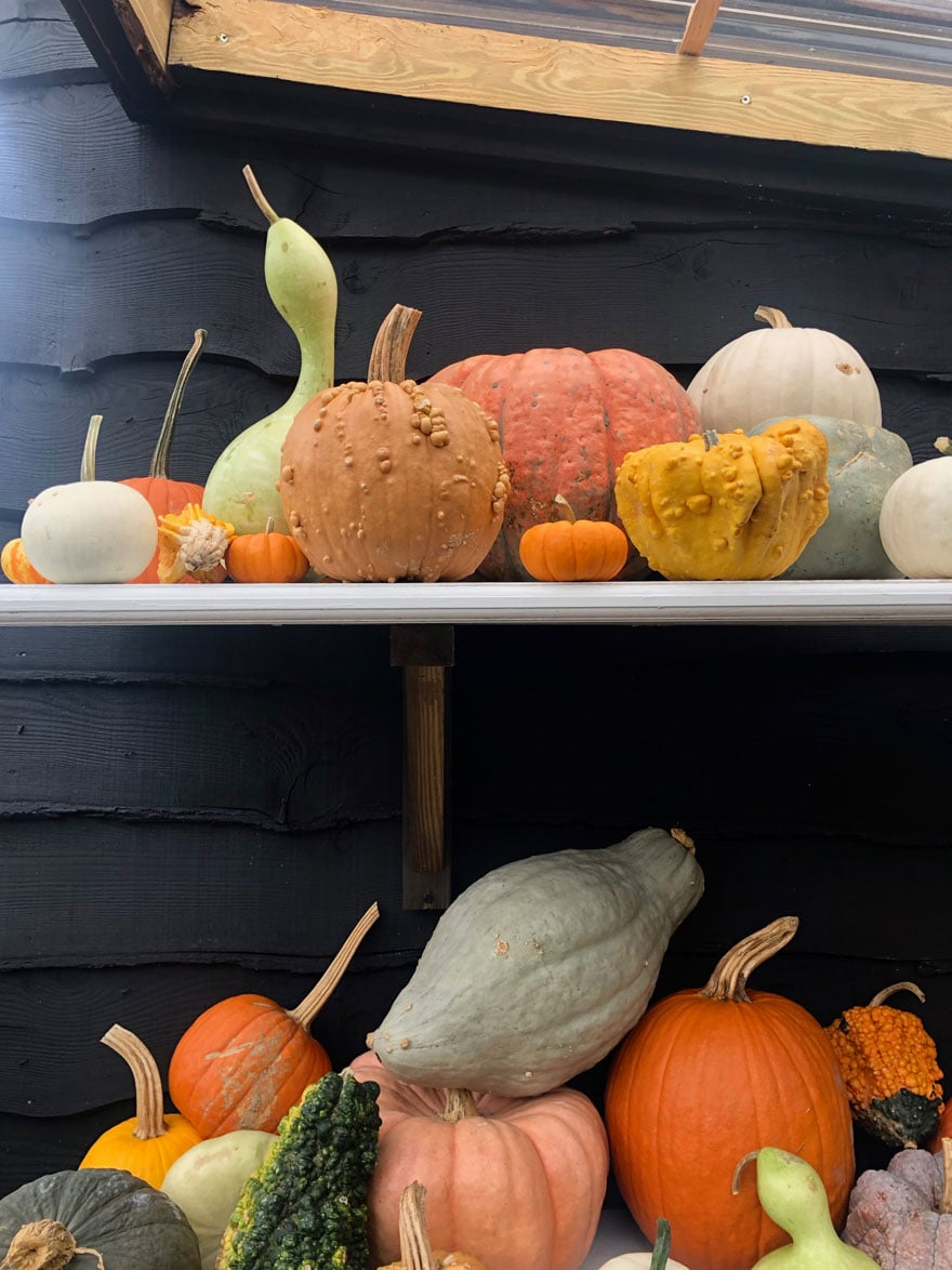 pumpkins and gourds against a black shed
