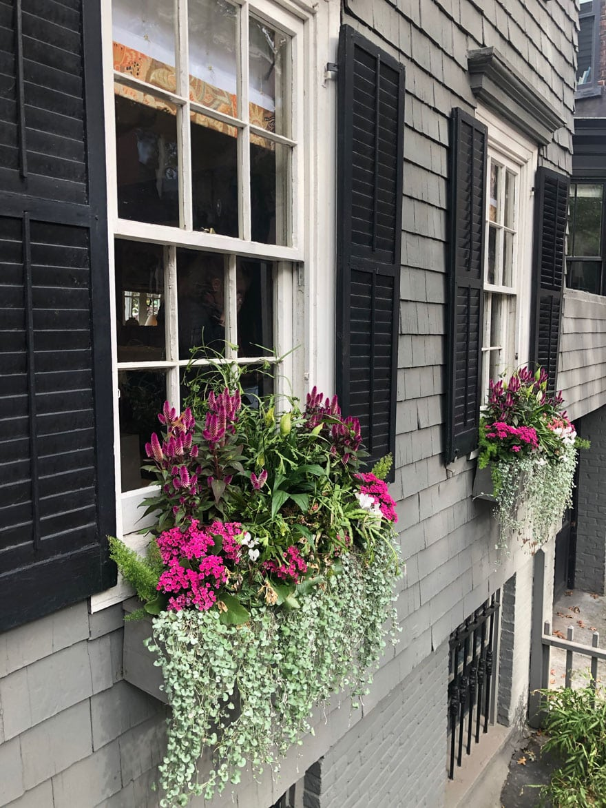 window boxes on townhouse