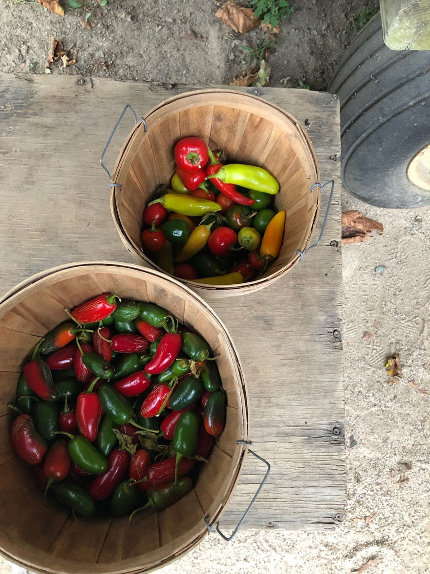 peppers in baskets at farm stand