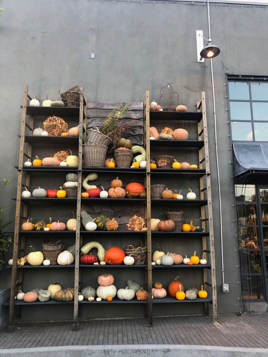 shelves with pumpkins and gourds against cement building