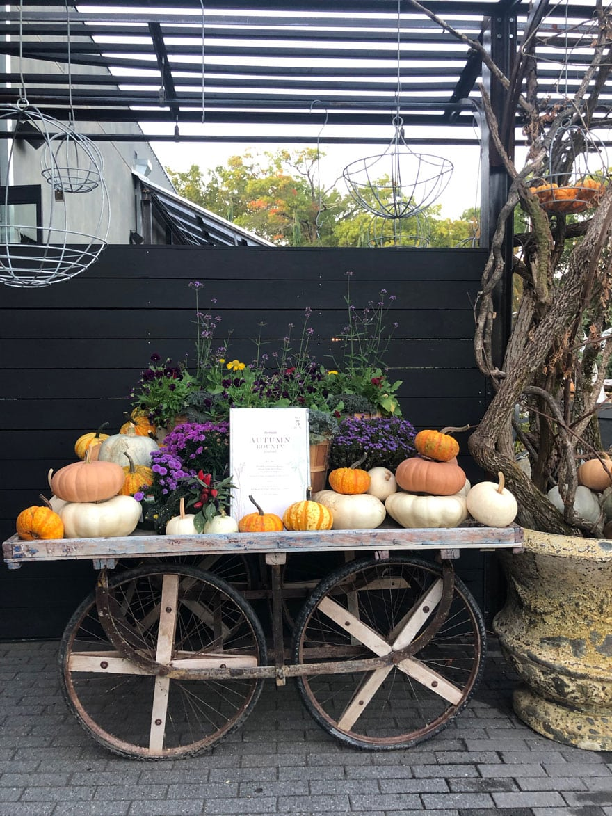 fire pit, planters, pumpkin display