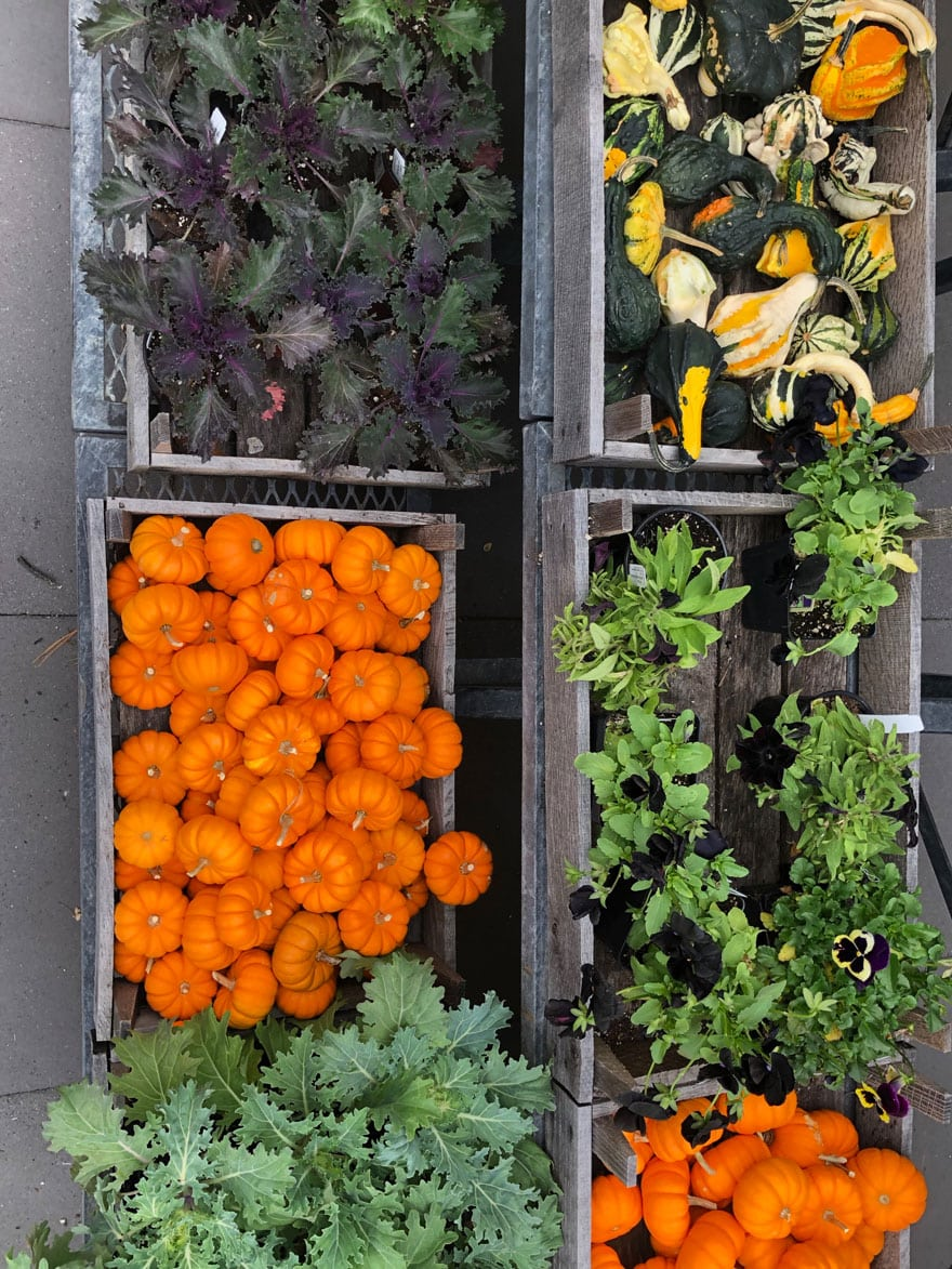 pumpkins, pansies, gourds, kale in crates