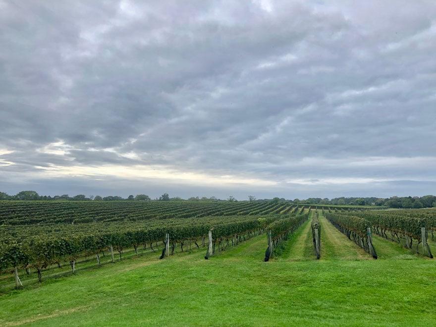 vineyards fall