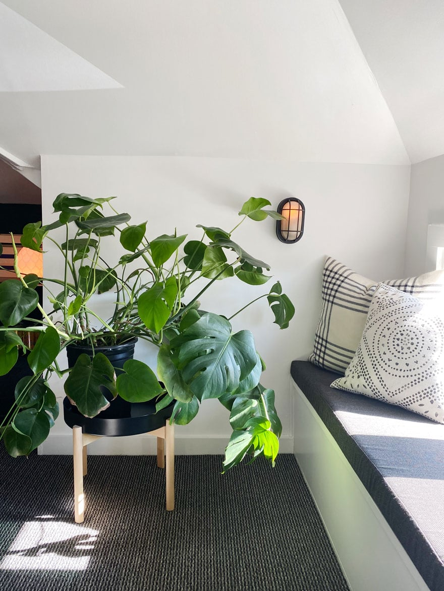 plant in room with window seat with pillows