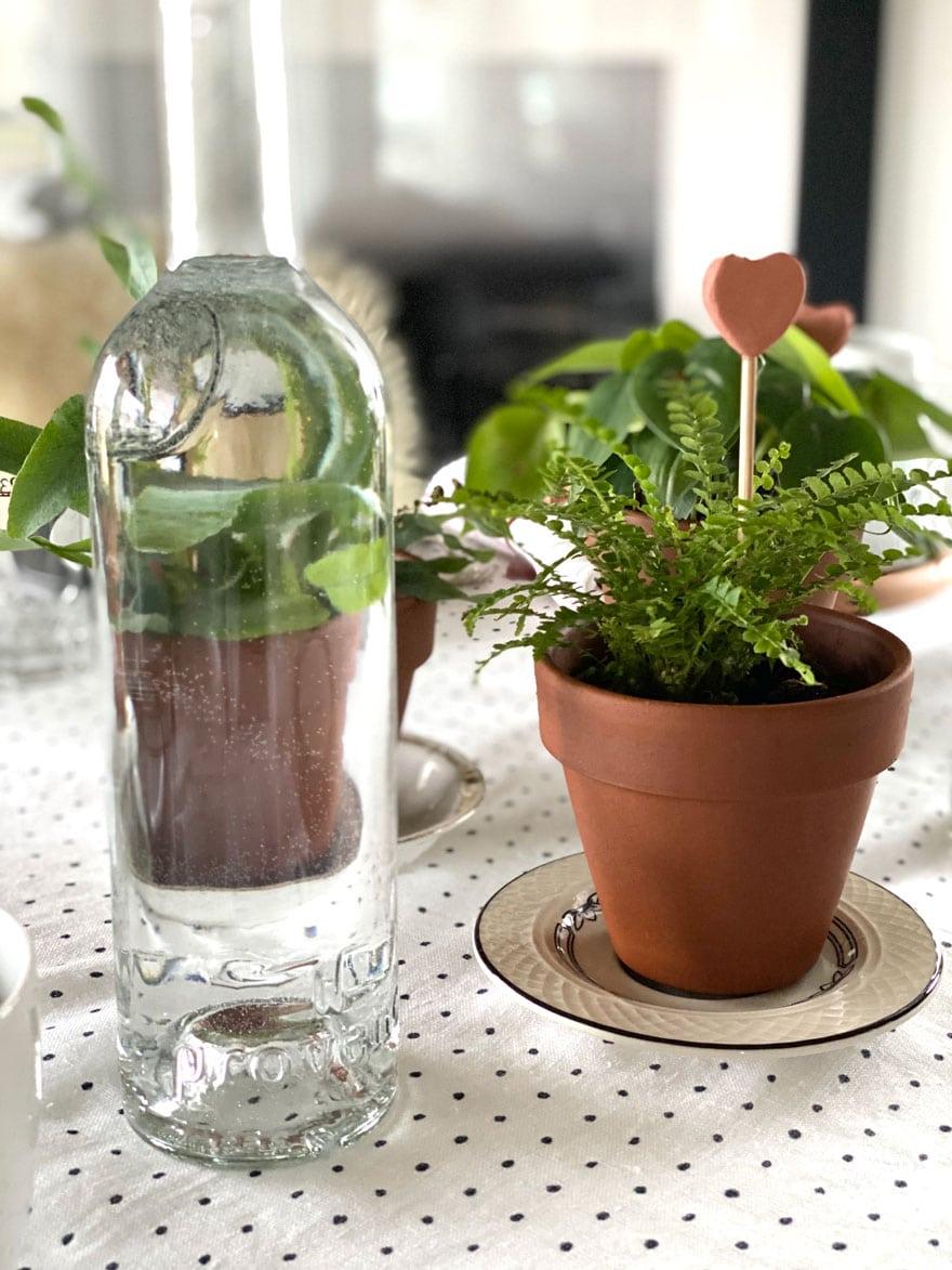 bottles, plants