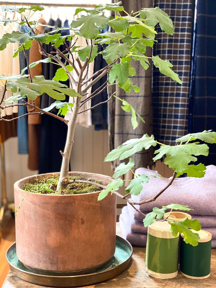 plant in planter