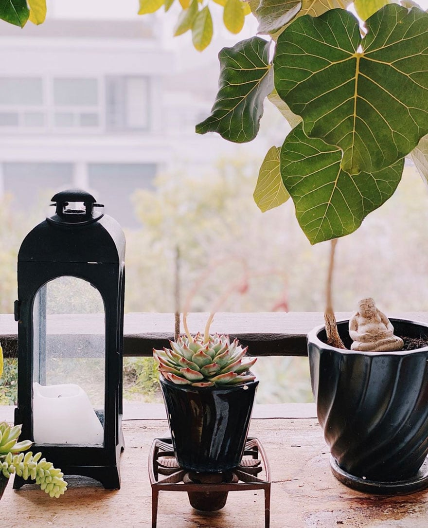 black planter with fig tree and succulent and a black lantern
