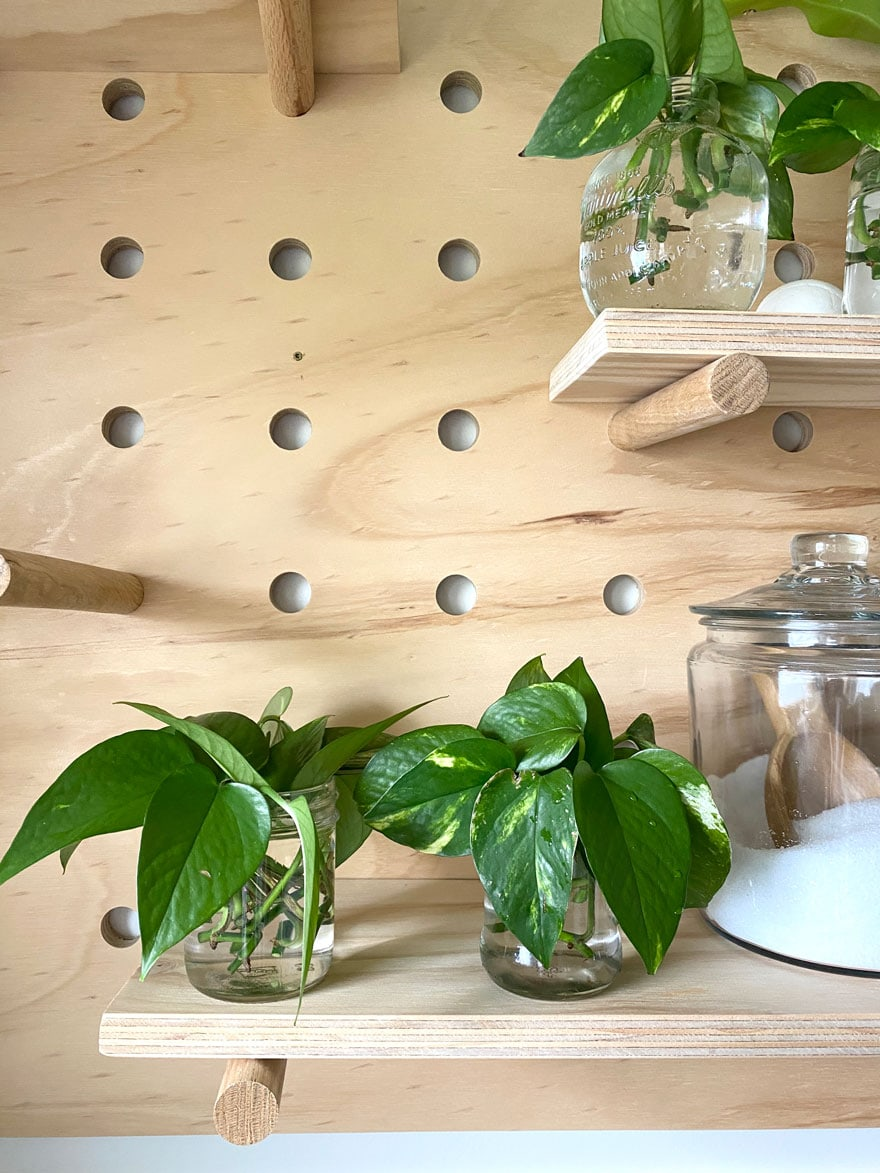 small jars with plant clippings, glass jar on peg board shelves