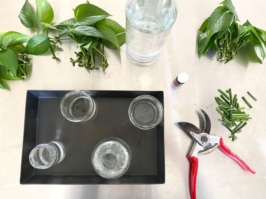 glass jars on tray, leaves, clippers, bottle of water