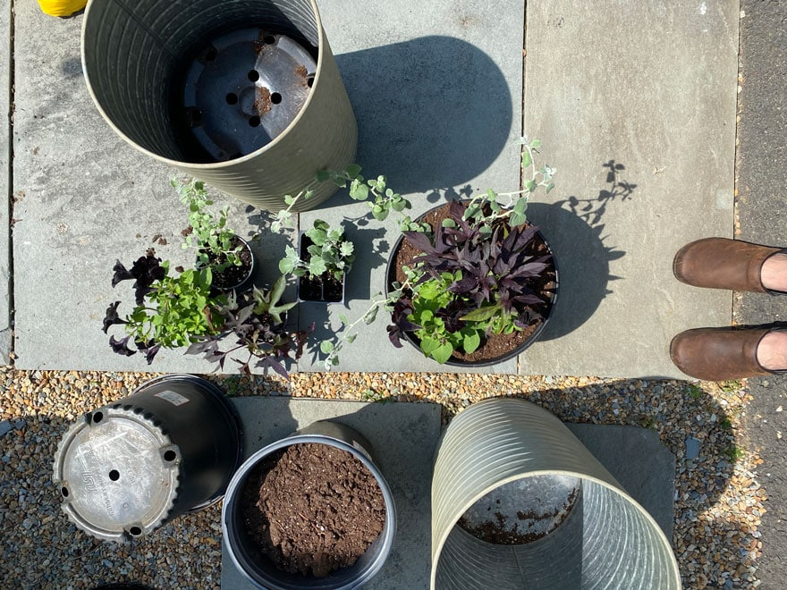 plants. planters, liners, on sidewalk