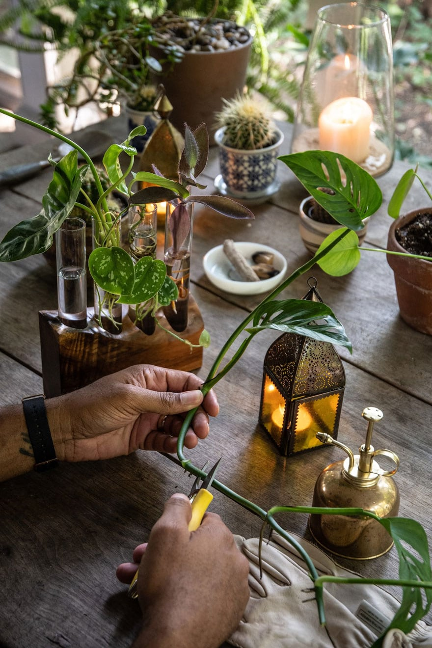 plants, mans hands cutting a plant, candle