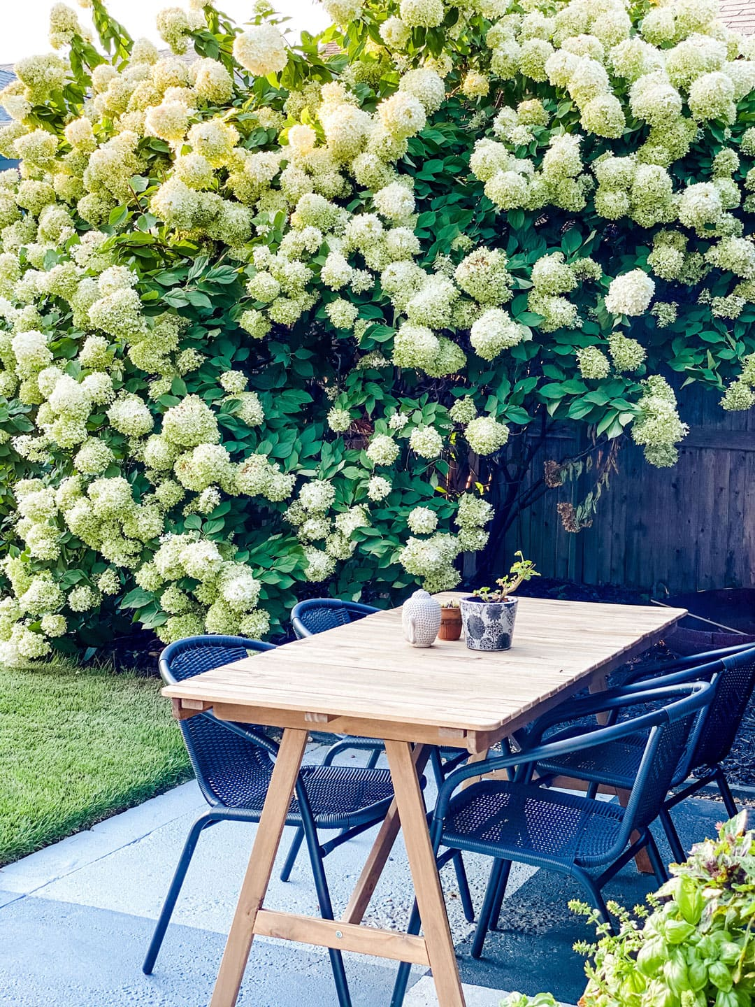 Lifestyle Blogger Annie Diamond shares an article about How and When to Deadhead your Hydrangeas