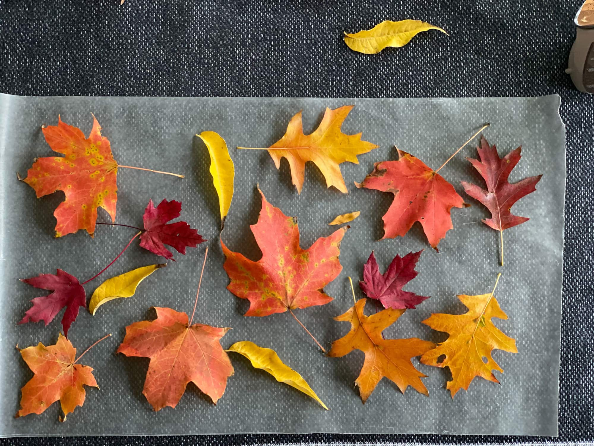 Leaves on wax paper
